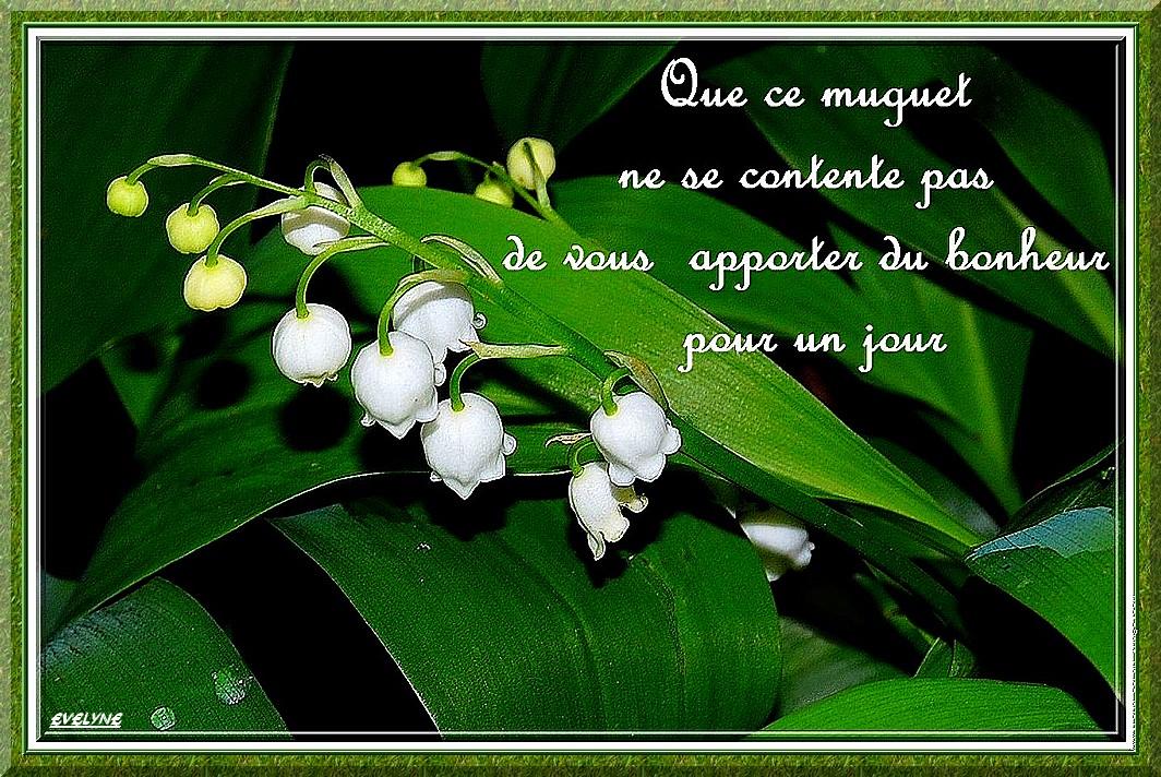 muguet-message | ♥♥ UN PETIT MONDE DE DOUCEUR ♥♥Bonjour♥♥